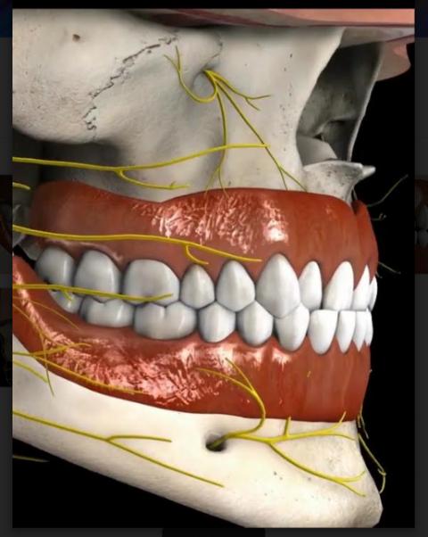 mordida cruzada ortodoncia Smiles Peru
